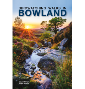Birdwatching Walks in Bowland